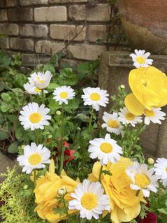 黄色い花の上に座って花の花瓶の写真・画像素材[1395038]