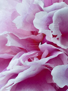 近くの花のアップの写真・画像素材[1434383]