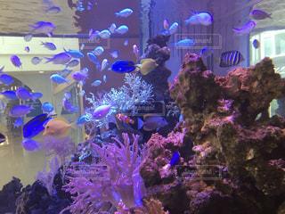 魚の写真・画像素材[1439715]
