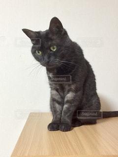 テーブルの上に座って猫の写真・画像素材[1439737]