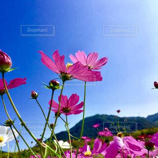 色とりどりの花のグループの写真・画像素材[1454592]