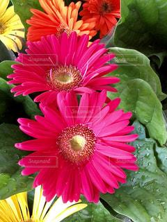 近くの花のアップの写真・画像素材[1537401]