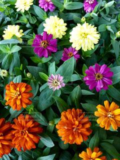 近くの花のアップの写真・画像素材[1537492]