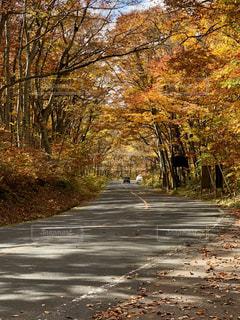 道の端に木の写真・画像素材[1598462]