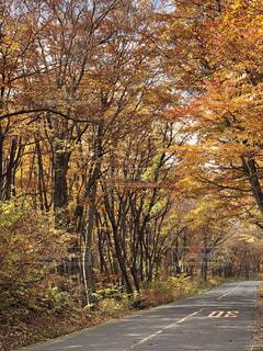 自然,秋,カラフル,道路,観光地,山道,樹木,木立,トンネル,木洩れ日,鳥取県,こもれび,多色,大山付近