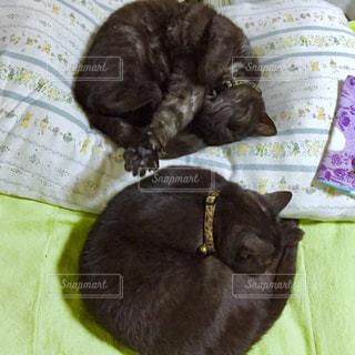 ベッドの上で横になっている猫の写真・画像素材[1622754]