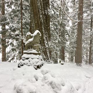 森の横に雪の山の写真・画像素材[1675385]