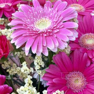 紫の花の束の写真・画像素材[1793716]