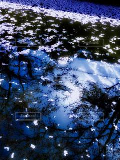 花びらの写真・画像素材[2010977]