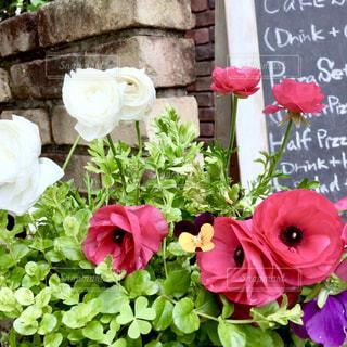 花,ピンク,白,カラフル,レンガ,メニュー,煉瓦,黒板,ラナンキュラス,フォトジェニック,スミレ
