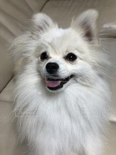 近くに犬のアップの写真・画像素材[1225912]