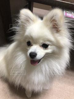 近くに犬のアップの写真・画像素材[1225968]