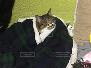 毛布の上に横になっている猫の写真・画像素材[1216035]