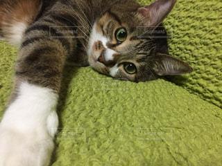 猫,お部屋,ねこ,癒し,可愛い,ソファ,cat,のんびり,ネコ