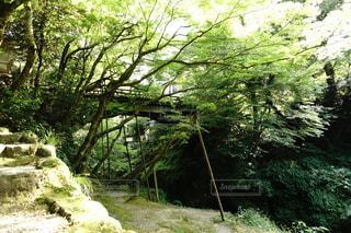 こおろぎ橋の写真・画像素材[2404486]