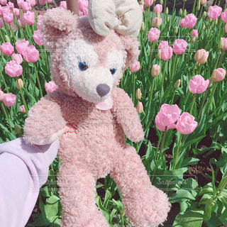 ピンク,チューリップ,女の子,ディズニーランド,ピンク色,シェリーメイ,桃色,pink,複数,インスタ映え