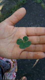小さな手のひらの中の 幸せの写真・画像素材[1201045]