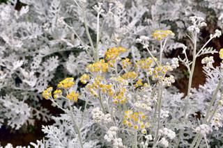 花,黄色,北海道,鮮やか,イエロー,色,yellow