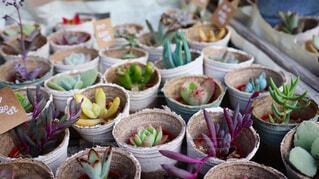 雑貨屋の多肉植物。の写真・画像素材[4239888]