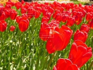 花の写真・画像素材[537661]