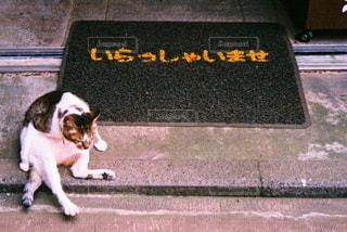 草の中に座っている犬の写真・画像素材[705718]