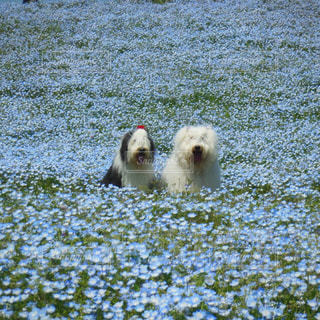 草の上に横になっている犬にはフィールドが覆われています。の写真・画像素材[1187311]