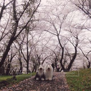 草の上に立っているシロクマ カバー フィールドの写真・画像素材[1187326]