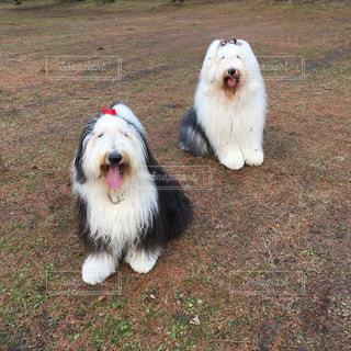 犬,動物,屋外,草,oes,満足お散歩