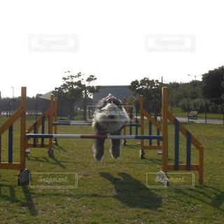 飛ぶよ〜🐾🐾の写真・画像素材[1246542]