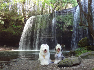 滝と犬🐕の写真・画像素材[1270251]
