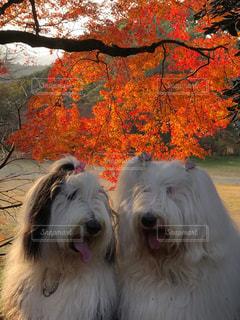 お散歩気持ちいい季節ですね。の写真・画像素材[1649018]