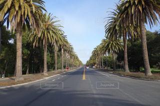 ヤシの木が並ぶ街の通りのビューの写真・画像素材[1225171]
