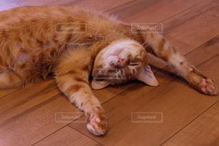 堅い木製の床の上に横になっている猫の写真・画像素材[1258704]