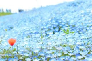 青い天国の写真・画像素材[1203071]