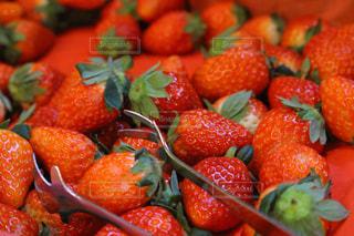 赤,いちご,苺,フルーツ,紅,フレッシュ,イチゴ,あまおう,紅ほっぺ