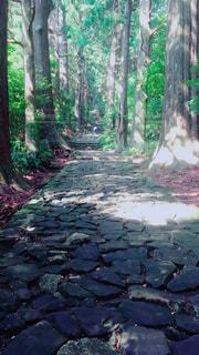 熊野古道の写真・画像素材[1196174]