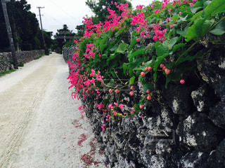 竹富島の写真・画像素材[1201157]