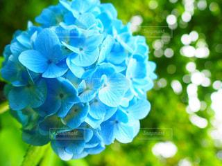 近くの花のアップの写真・画像素材[1217496]
