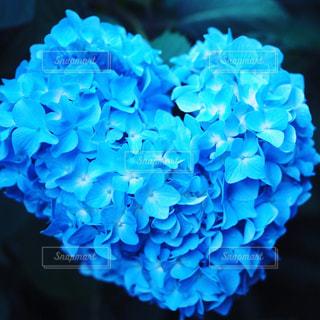 ハート,紫陽花,ブルー,梅雨,雨の日