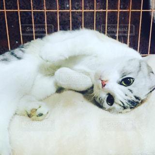 眠そうな子猫の写真・画像素材[1257074]