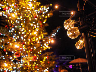 電球とツリーの写真・画像素材[1683779]