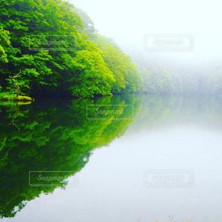 夏の蔦沼の写真・画像素材[1685689]
