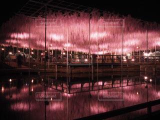 足利フラワーパークのライトアップの写真・画像素材[1808324]