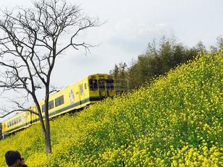 いすみ鉄道と菜の花の写真・画像素材[1829467]