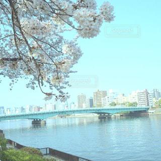 隅田川と桜の写真・画像素材[1832752]