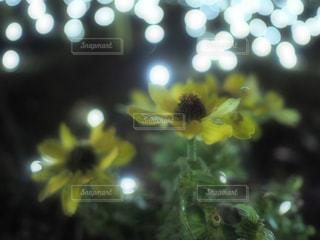 江ノ島で見つけたお花の写真・画像素材[1879624]