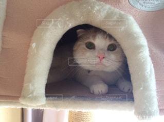 お家の中の猫の写真・画像素材[2316649]