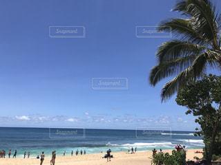 ハワイ★の写真・画像素材[1389455]