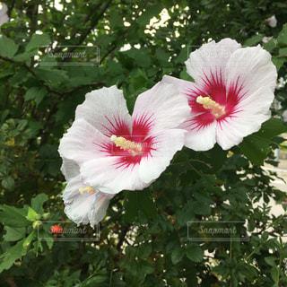 自然,花,ピンク,ピンク色,pink,ガーデン