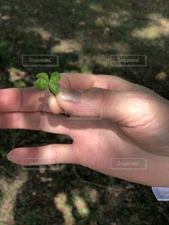 花を持っている手の写真・画像素材[1190118]